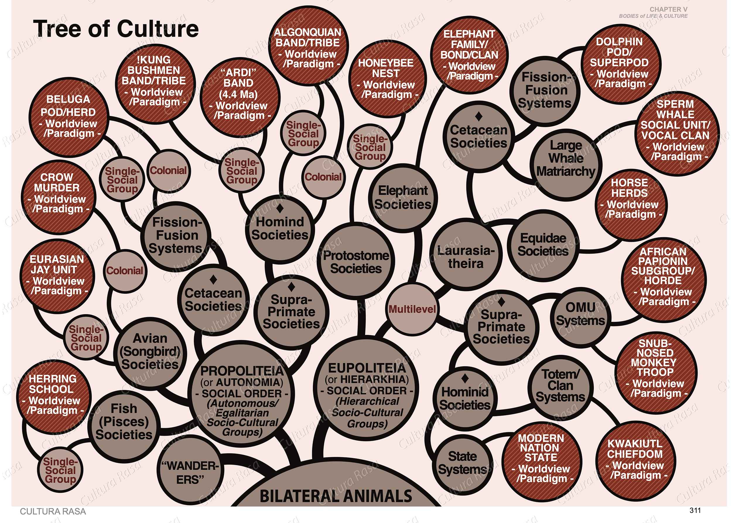 Classification of cultural systems based on their social organization.